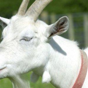 curso-presencial-curso-de-bienestar-animal-en-explotaciones-ganaderas