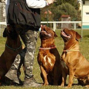 curso-presencial-curso-de-adiestramiento-de-perros