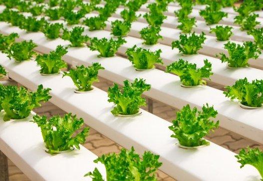curso-online-manipulador-de-alimentos-industrias-transformadoras