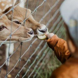 curso-online-cuidador-de-parques-zoologicos