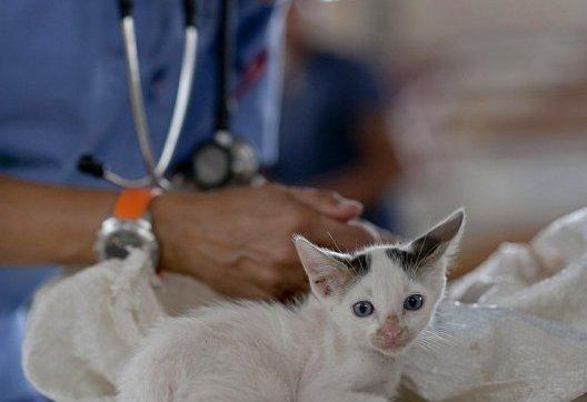 curso-online-auxiliar-de-veterinaria