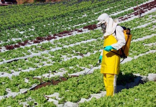 La importancia de la aplicación de productos fitosanitarios