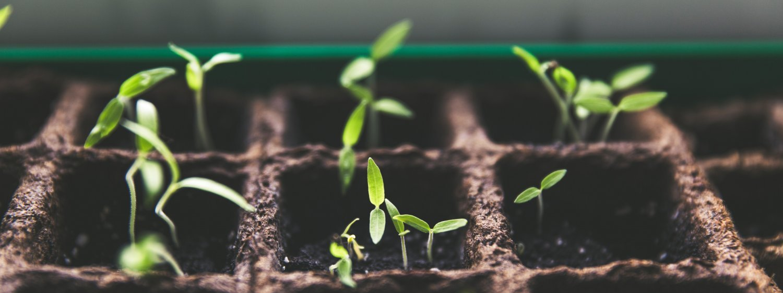 curso-aplicacion-productos-fitosanitario-basico