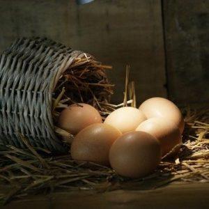 curso-online-produccion-de-aves-para-reproduccion-y-obtencion-de-carnes-y-huevos