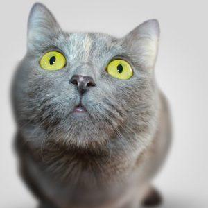 curso-online-especialista-en-urgencias-veterinarias-y-quirofanos