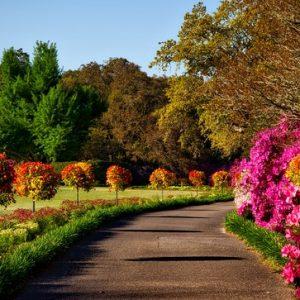 curso-online-instalacion-de-parques-y-jardines-y-restauracion-del-paisaje