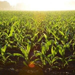 curso-online-usuario-profesional-de-productos-fitosanitarios-nivel-cualificado