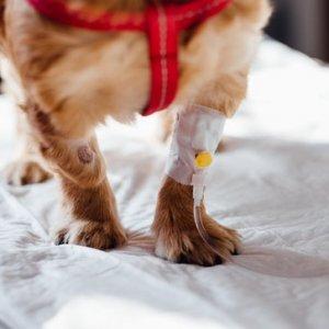 master-online-en-farmacologia-veterinaria