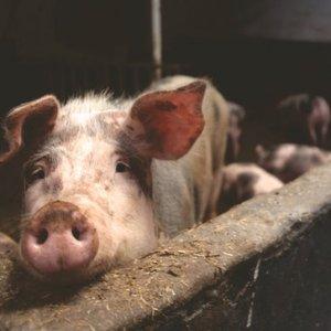 curso-online-gestion-de-los-procesos-de-produccion-de-animales-de-renuevo-de-reproductores-y-crias-y-de-leche