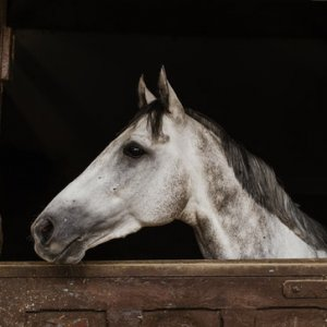 curso-online-planificacion-y-control-en-el-desarrollo-del-proceso-reproductivo-del-ganado-equino